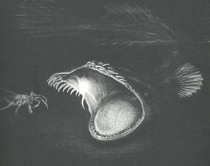 Black angler fish with lighted lure in its mouth
